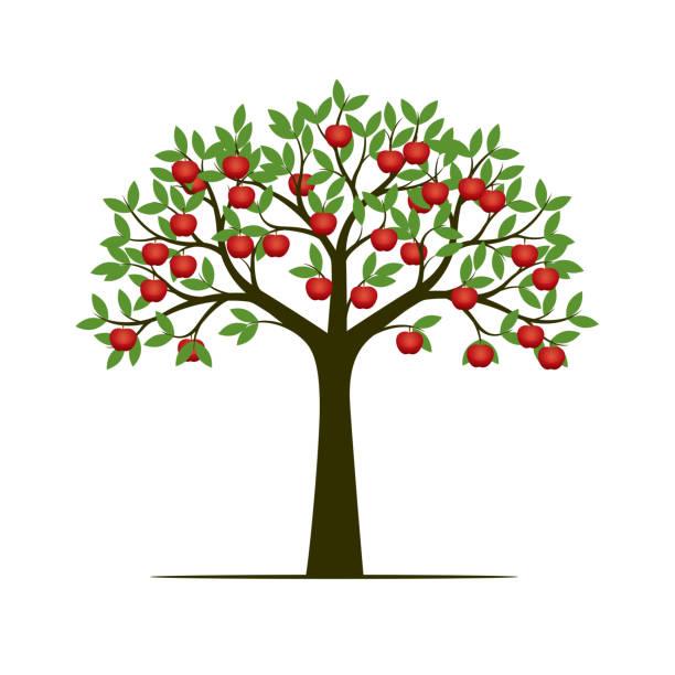 7 178 Apple Tree Illustrations Clip Art Istock