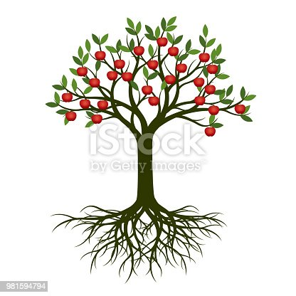 Green spring tree with root and red apple. Vector Illustration.