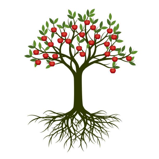 stockillustraties, clipart, cartoons en iconen met groene lente boom met wortel en rode appels. vectorillustratie. - fruitboom