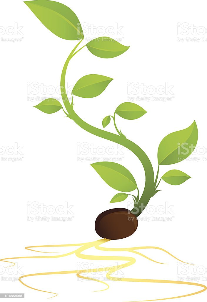 Green Sprout Growing From Seed With Roots vector art illustration