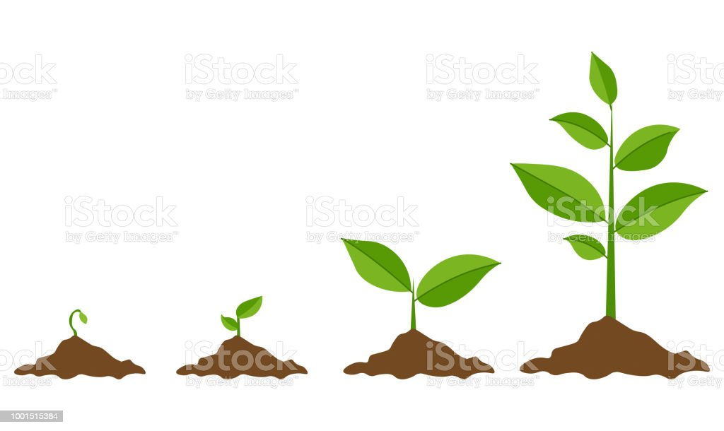 Green Sprout Set, Vector Illustration royalty-free green sprout set vector illustration stock illustration - download image now