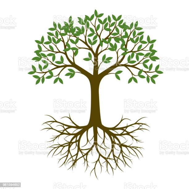 Green summer tree with roots vector illustration plant in garden vector id981594652?b=1&k=6&m=981594652&s=612x612&h=1thurswumf3hrqc9aiq4cdtbhjp2dkcskfpgalofs 4=