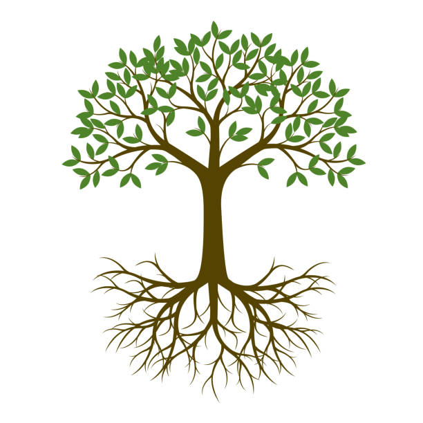 Tree Roots Illustrations, Royalty-Free Vector Graphics & Clip Art ...