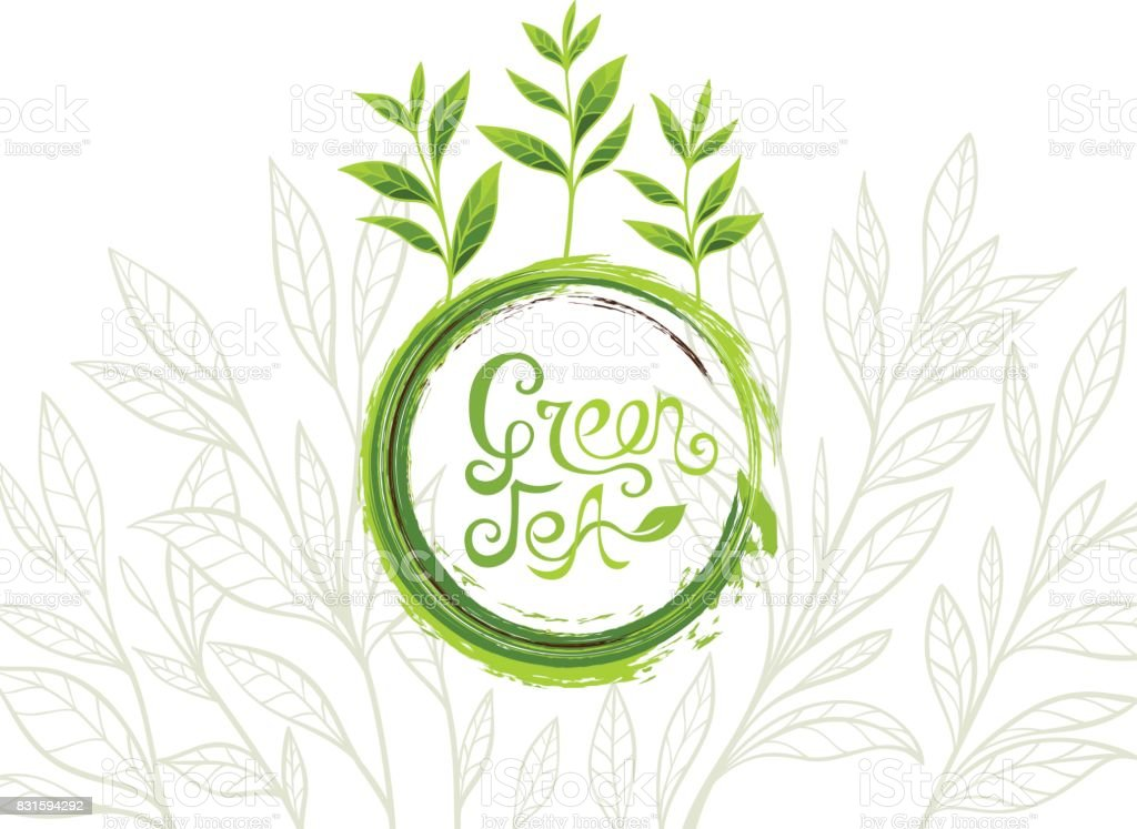 Green tea banner with ink grunge lettering design element and leaves in line art style vector art illustration