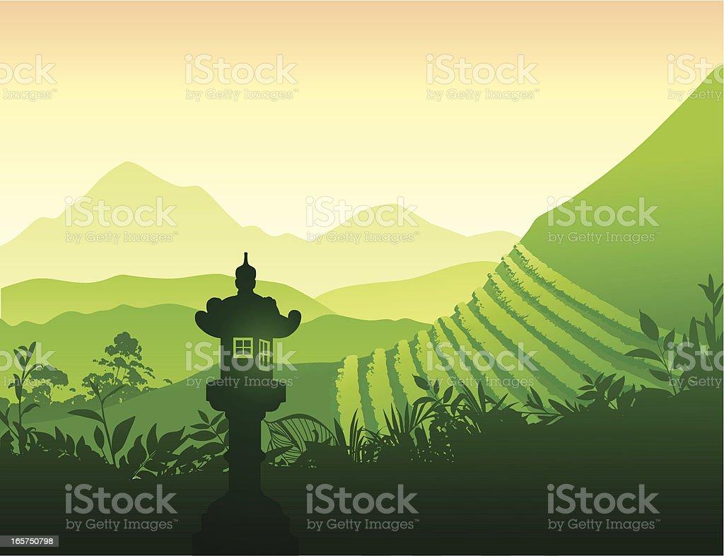 Green Tea field royalty-free stock vector art