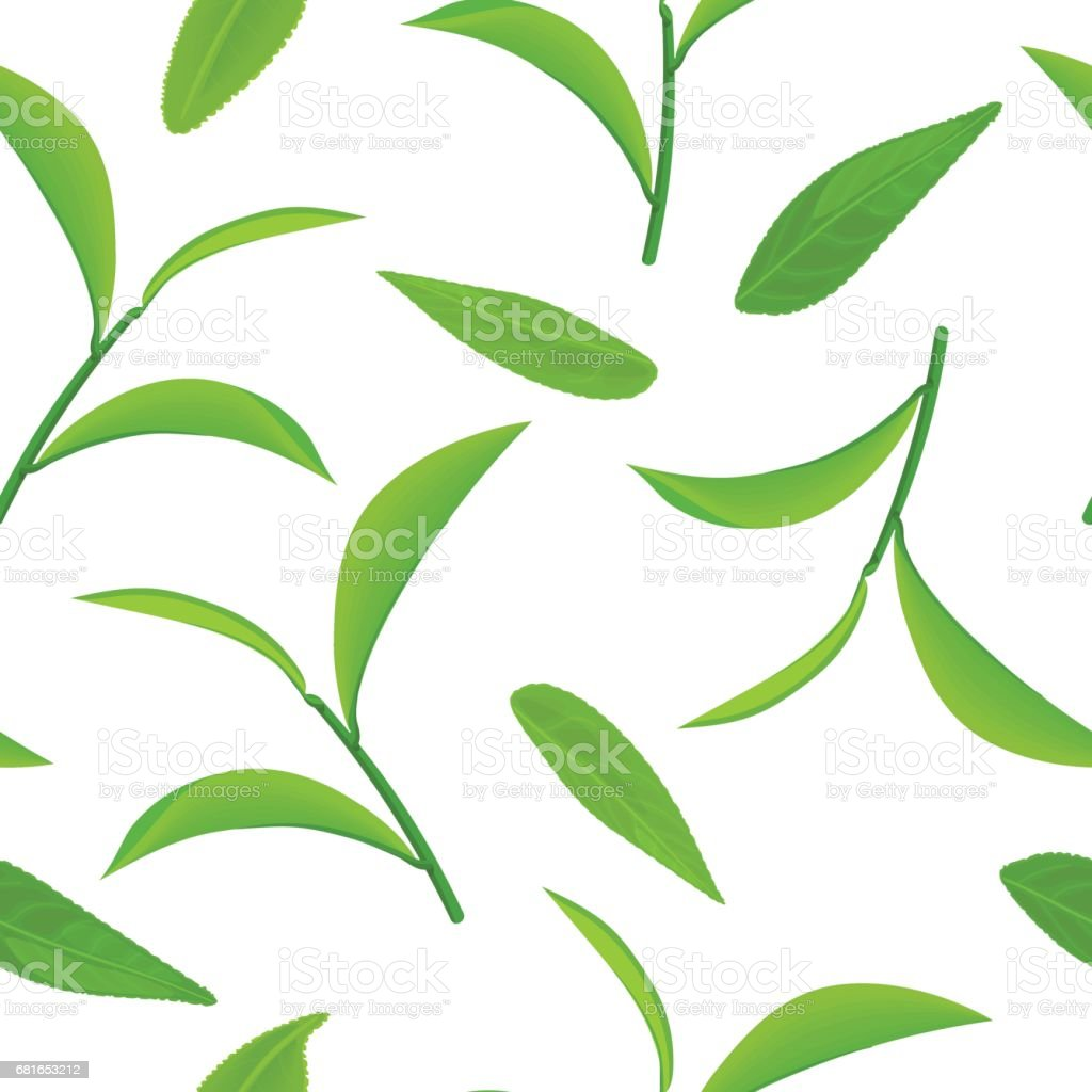 Green Tea Leaves And Twigs Seamless Pattern Vector ...