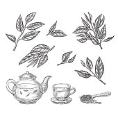 Green tea sketch vector illustration. Leaves, teapot and cup hand drawn isolated design elements.