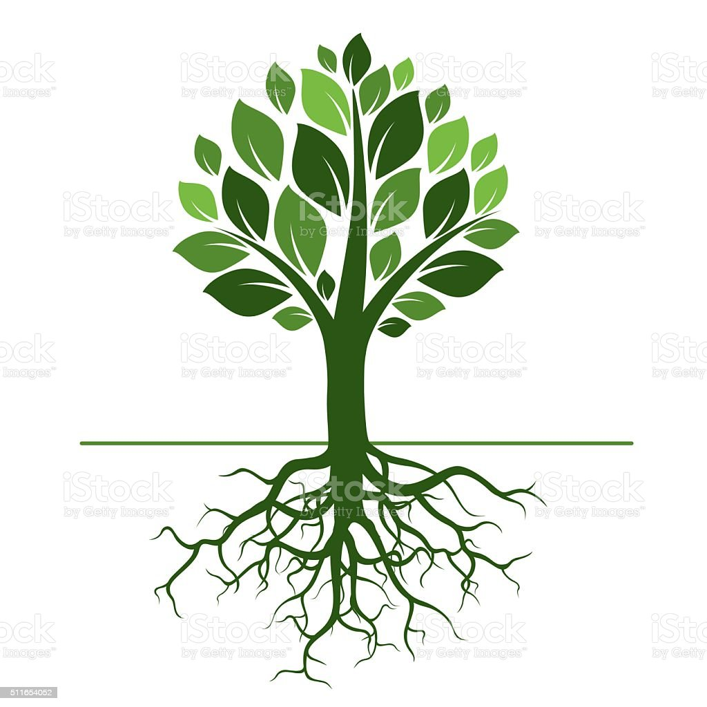 Green Tree And Roots Vector Illustration Stock ...