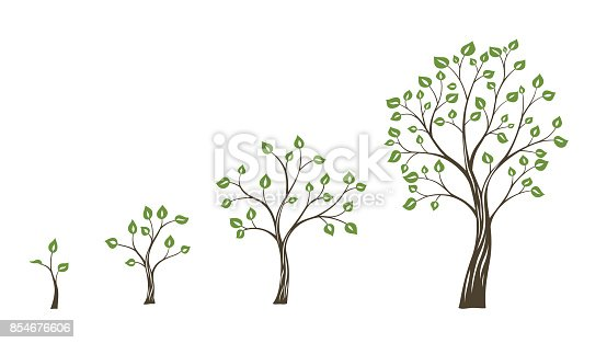 Green tree growth eco concept. Tree life cycle.