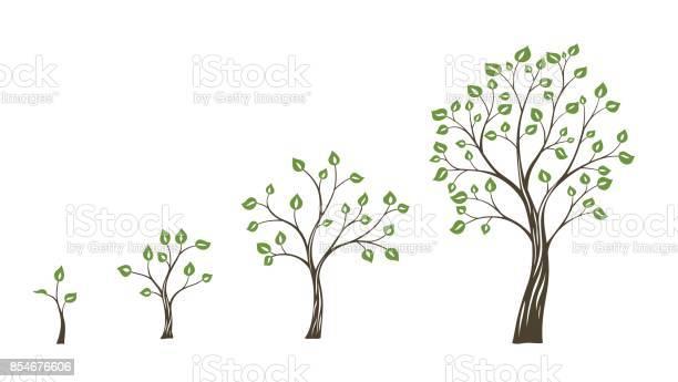 Green tree growth eco concept tree life cycle vector id854676606?b=1&k=6&m=854676606&s=612x612&h=lwdotsohhdhri1kq7grnrsvl5mh7dyir3kqee o7sio=