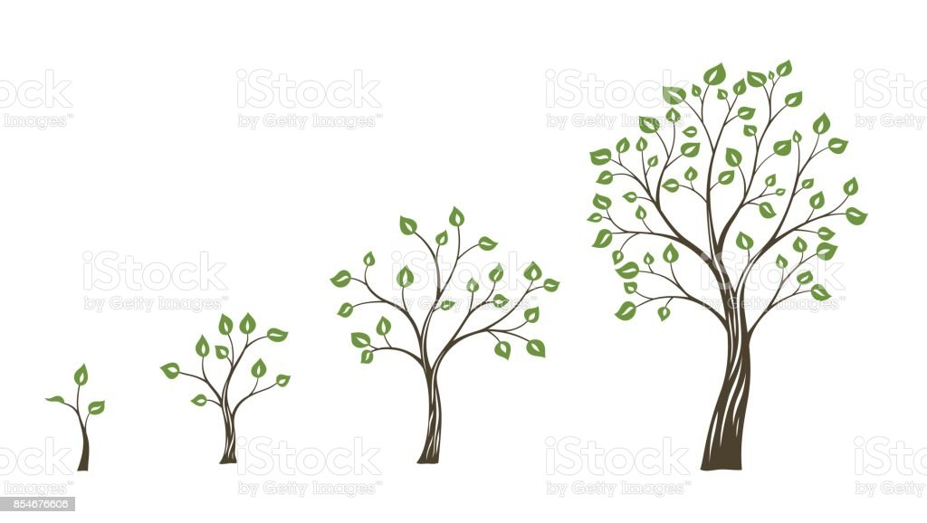 Green tree growth eco concept. Tree life cycle vector art illustration