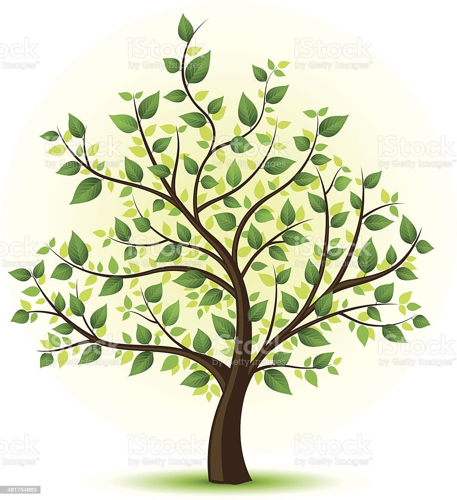 картинки дерево зелёное