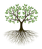 Green Tree of Life. Silhouette shape with Leaves and Roots. Vector outline Illustration. Plant in Garden. Royalty free vector object.