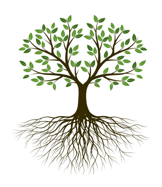 368 Tree Of Life Illustrations Clip Art Istock
