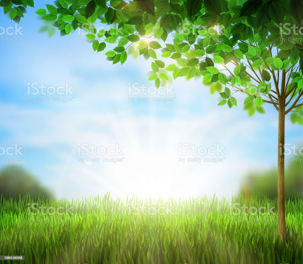 green tree on the summer glade. royalty-free green tree on the summer glade stock vector art & more images of backgrounds