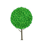 Green tree with round crown. Vector illustration isolated on white background