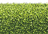 Green Tree Wall on isolated Vector