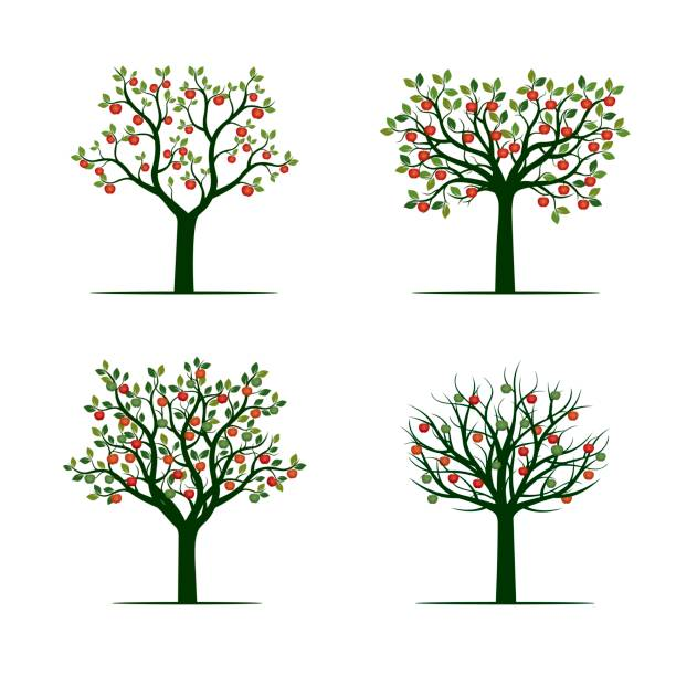 stockillustraties, clipart, cartoons en iconen met groene boom met rode appels. vectorillustratie. - fruitboom