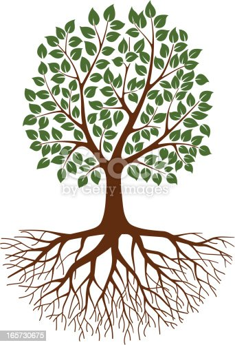 Green Tree With Roots Stock Vector Art 165730675 Istock