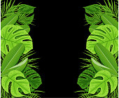 Green tropical leaves on a black background. Vector summer background with tropical plants. EPS 10 file, contains transparencies.