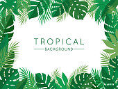 istock Green Tropical Summer Background with Exotic Palm Plants and Leaves 1218065262