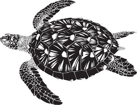 Green Turtle swimming B&W