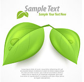 Green two leaves with drop water & text, vector illustration.