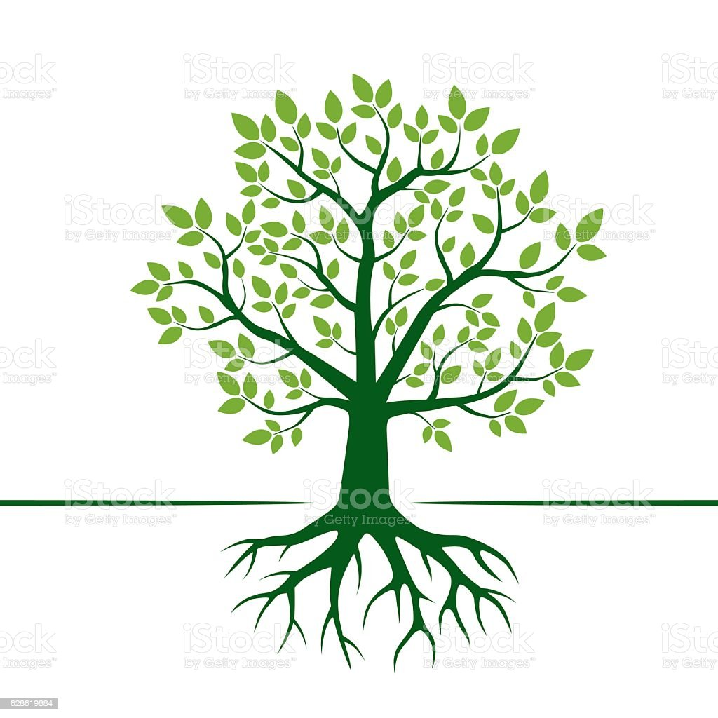 green vector tree and roots vector illustration stock vector art rh istockphoto com tree with roots silhouette vector free tree with roots vector logo