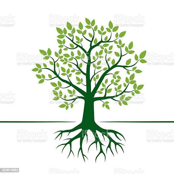Green vector tree and roots vector illustration vector id628619884?b=1&k=6&m=628619884&s=612x612&h=dwxhosfmljhbxfzwryw47rdcpf6wqr2uqfjonp zkuk=