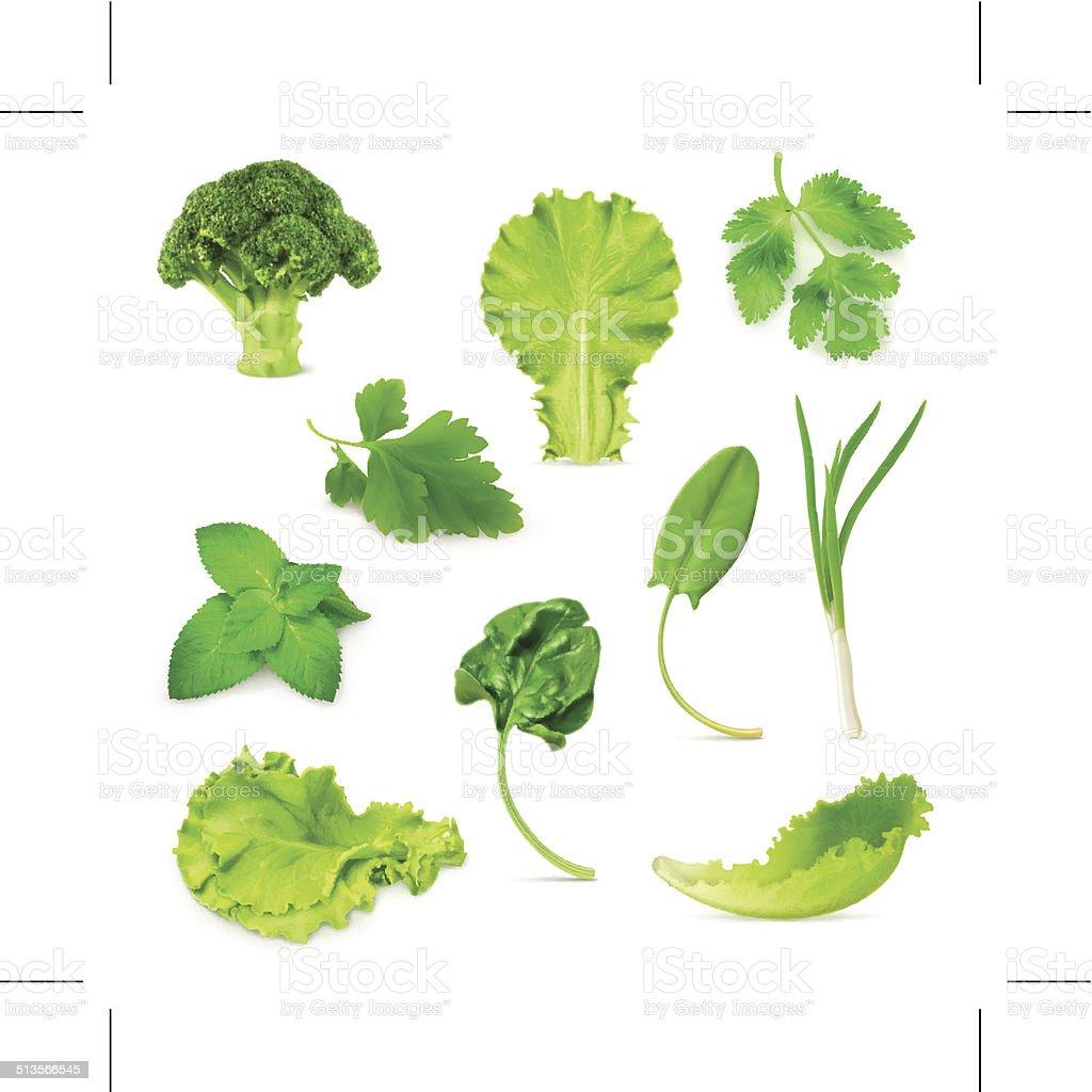Green vegetables and herbs set vector art illustration
