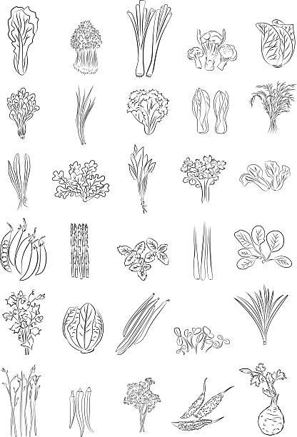 Green Vegetables Vector illustration of Green Vegetables in line art mode scallion stock illustrations