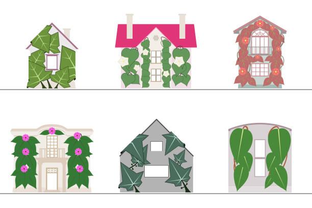 ilustrações de stock, clip art, desenhos animados e ícones de green wall and green facade systems with no gradients - ivy building