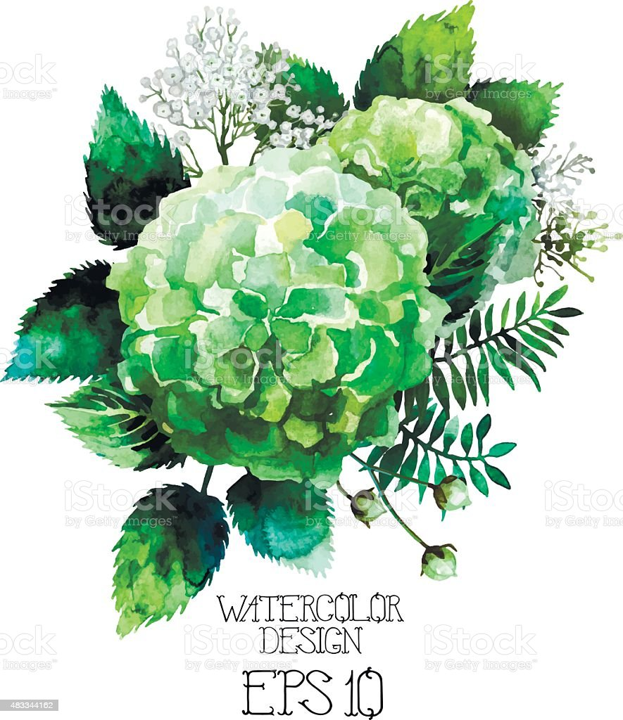Green watercolor  hydrangea vignette vector art illustration