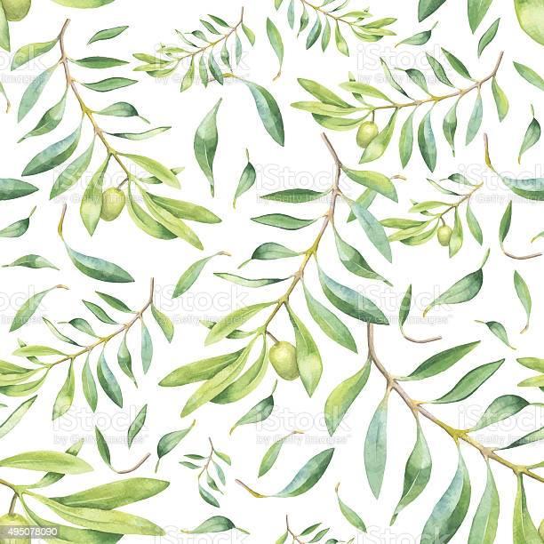 Green watercolor olive branch vector id495078090?b=1&k=6&m=495078090&s=612x612&h= yqrtkmmivtidruyjazjlnrw05ocuzmxhelbbtikso4=