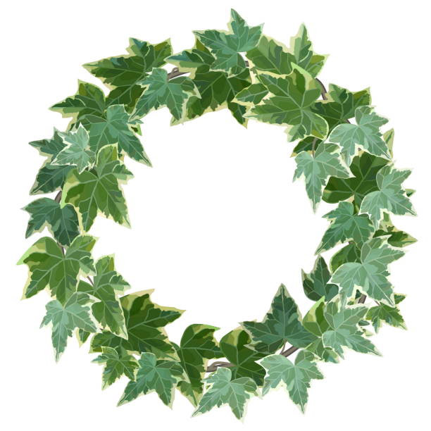 ilustrações de stock, clip art, desenhos animados e ícones de green wreath made of common ivy with copy space - ivy building