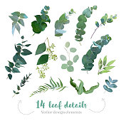 Greenery leaves vector big collection. Seeded eucalyptus, parvifolia foliage, plants mix.  Hand painted branches on white background. Watercolor style set. All elements are isolated and editable