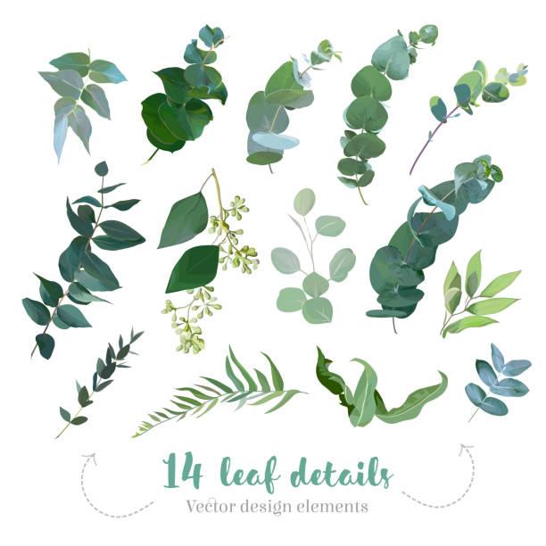bildbanksillustrationer, clip art samt tecknat material och ikoner med grönska bladen vektor stora samling - eucalyptus