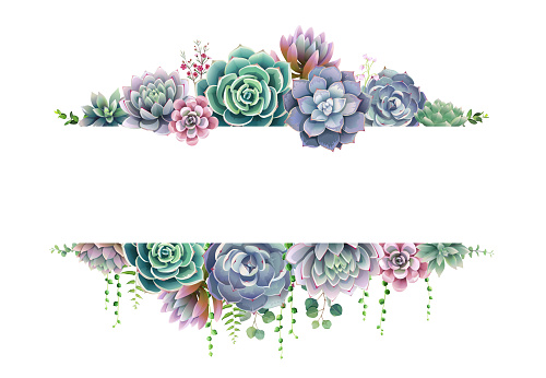 Greenery, succulent and branches frame border on white background. Beautiful template for invite or greeting card, banner, backdrop. All elements are isolated and editable.