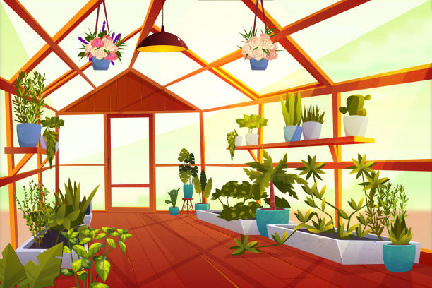 Greenhouse interior with garden inside, orangery Greenhouse interior with garden inside. Large bright empty orangery with glass walls, windows and wooden floor, place for growing green plants and flowers, inner view. Cartoon vector illustration garden center stock illustrations