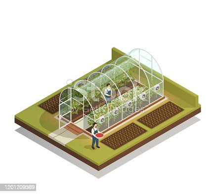 Tunnel shaped plastic greenhouse facility with workers watering  plants and fertilizing seedlings isometric composition vector illustration