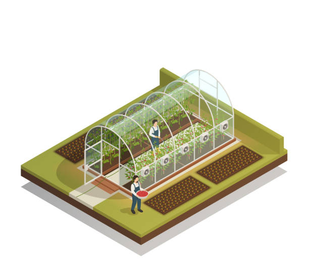 greenhouse isometric composition Tunnel shaped plastic greenhouse facility with workers watering  plants and fertilizing seedlings isometric composition vector illustration 20th century stock illustrations