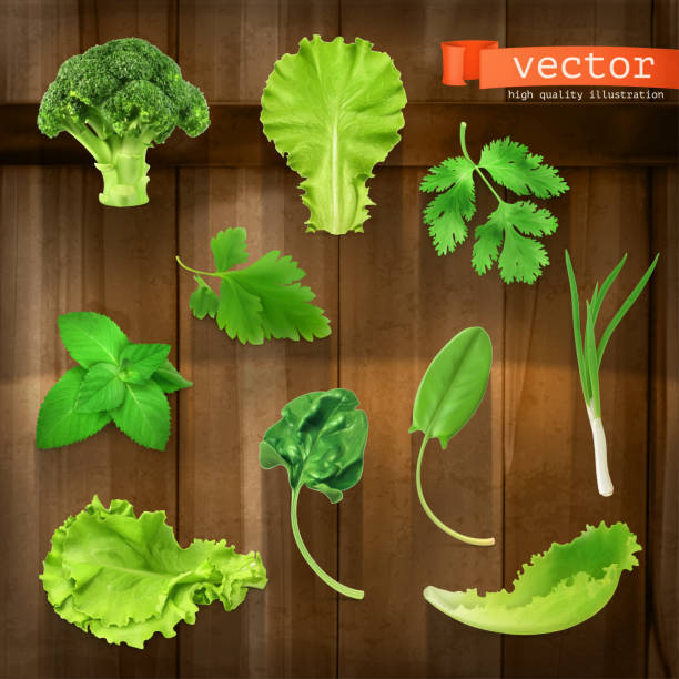 greens, vector icon set on wooden board - lettuce stock illustrations
