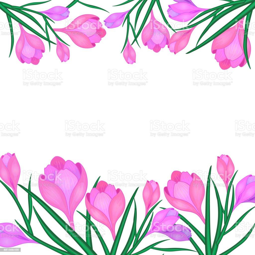 greeting card Crocus or saffron vector art illustration