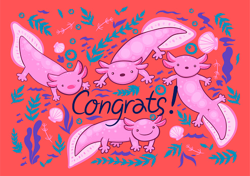 Greeting card with axolotl. Inscription Congrats. Vector graphics