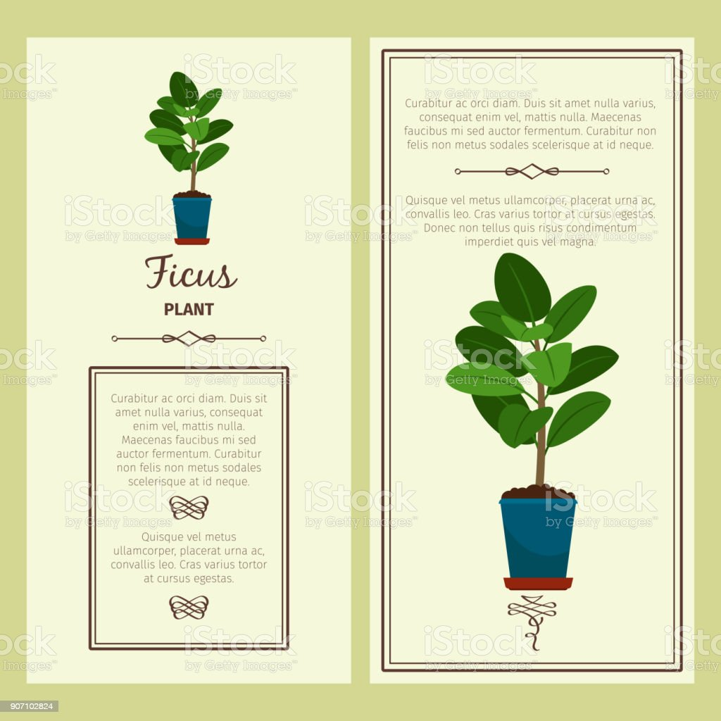 Greeting card with ficus plant vector art illustration