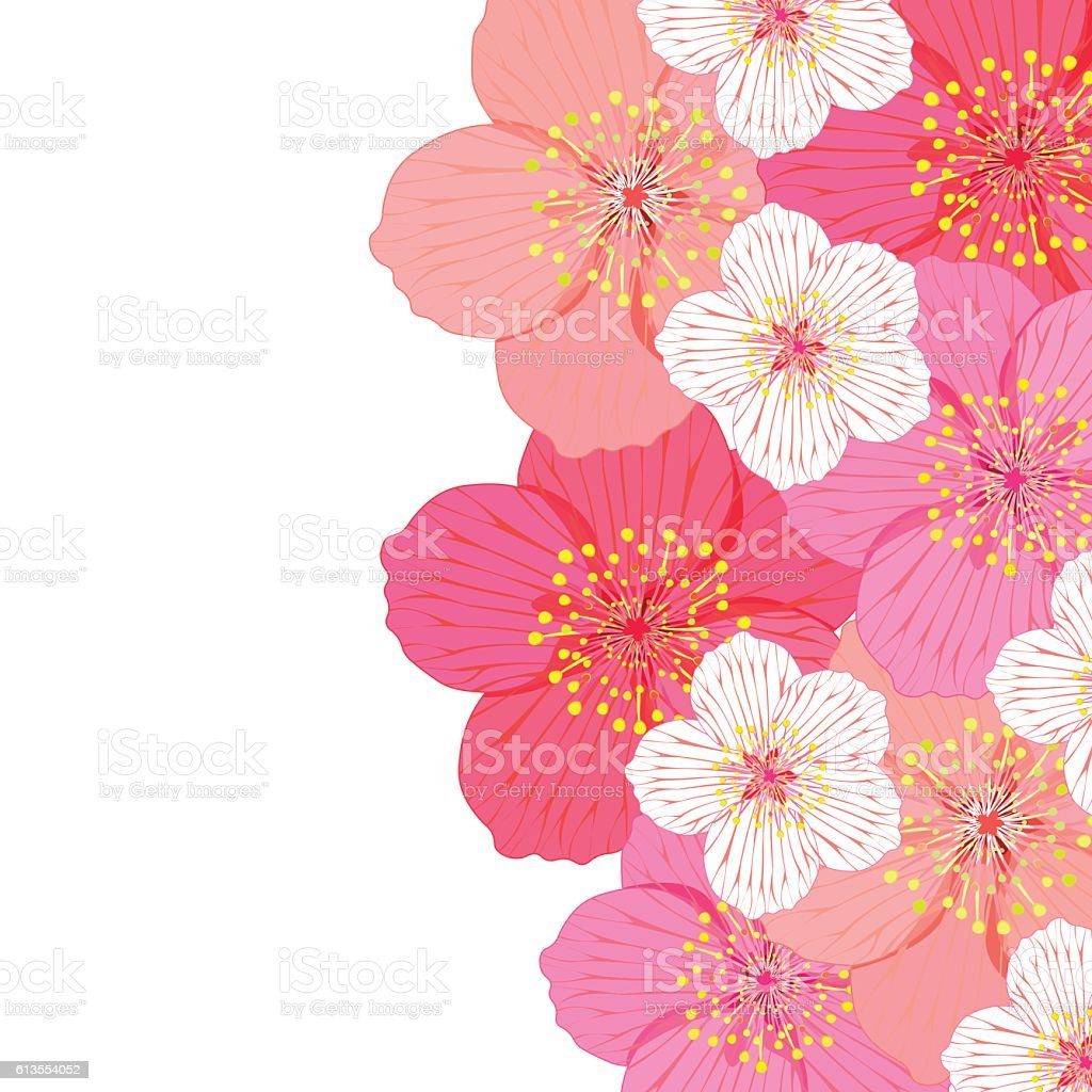 greeting card with flowers of Japanese of cherries. vector illus vector art illustration