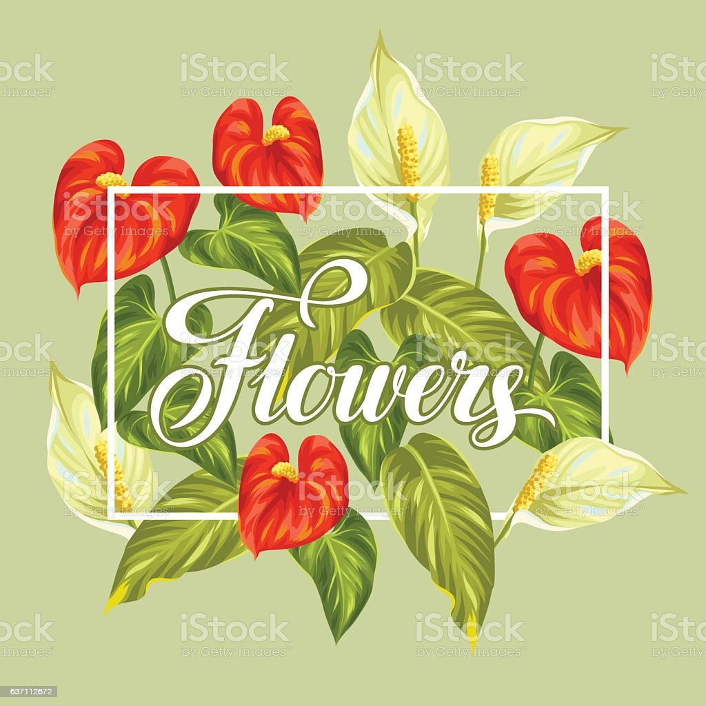 Greeting card with flowers spathiphyllum and anthurium - Illustration vectorielle