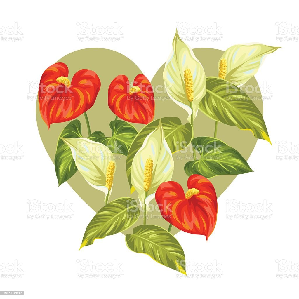 Peace Lily Clip Art Royalty Free Peace Lil...