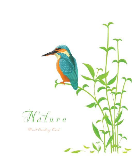 Greeting card with Kingfisher bird and bamboo isolated on white background. Greeting card with Kingfisher bird and bamboo isolated on white background. kingfisher stock illustrations