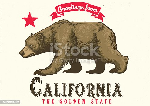 vector of greeting from california with brown bear